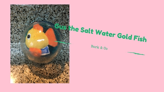 Gus the Salt Water Gold Fish